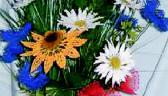 Blumen & mehr
