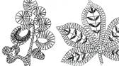 Bäume & Blätter