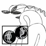 Klöppelbrief Vögel