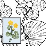 Pattern Marsh Marigold