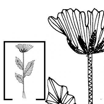 Klöppelbrief Kornblume