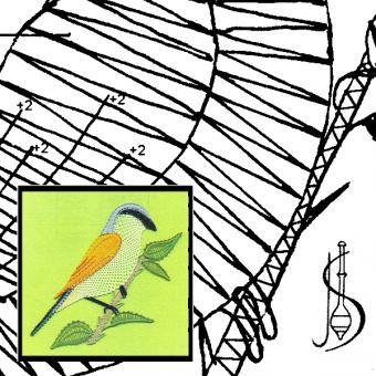 Pattern Red-Backed Shrike