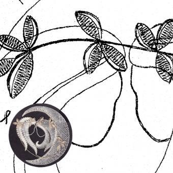 Pattern Gemini (Ø: 12 cm)