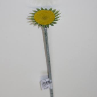 Blumenstiel Gerbera