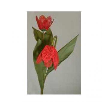 Klöppelbrief - Geklöppelte Blumen - Tulpe