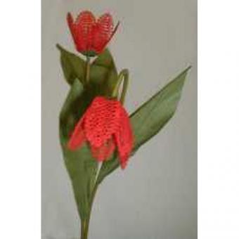 Blumenstiel Tulpe