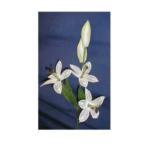Blumenstiel Lilie