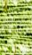 weiß/grün (669)